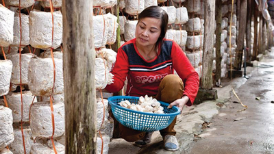 Masan works closely with communities around Nui Phao and helped establish a mushroom farm.